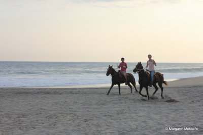 Horse riding down the beach
