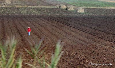 Mexican farmer in his field
