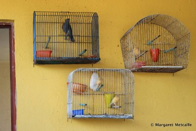 Birds in cages on yellow wall