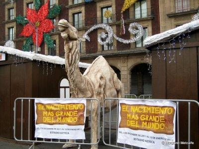 IMG_0189_-_Camel.jpg