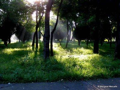 IMG_0281_-_Trees.jpg