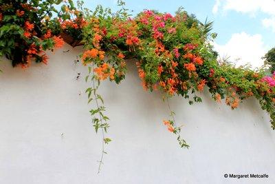 IMG_0639_-_Flowers.jpg