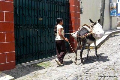 IMG_2788_-.._donkey.jpg