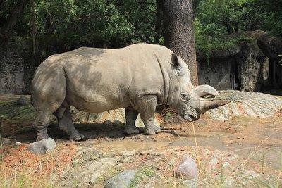 IMG_2979_-_Rhino.jpg