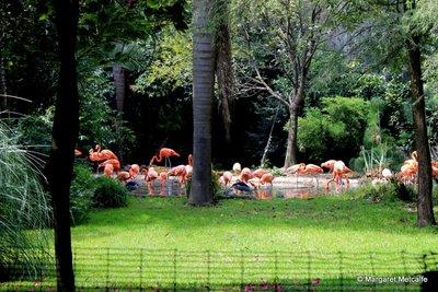 IMG_3125_-_Flamingos.jpg
