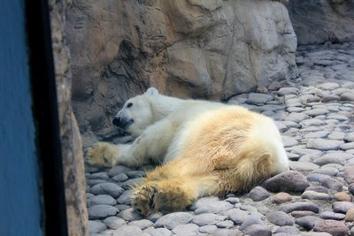 IMG_3220_-_Polar_bear.jpg