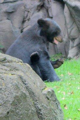 IMG_3226_-_Bear.jpg