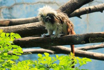 IMG_3282_-.._monkey.jpg