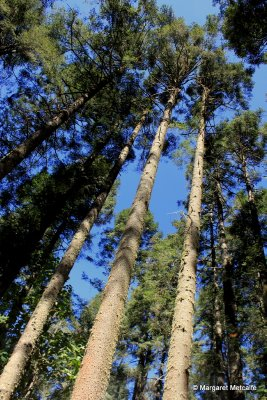 IMG_5280_-..g_trees.jpg
