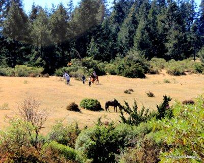 IMG_5374_-_Horses.jpg