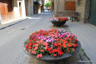Bright summer flowers in Camprodon