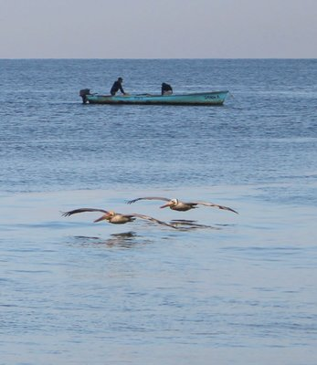 Fishermen and pelicans