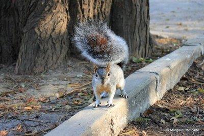 IMG_8051_-_Squirrel.jpg