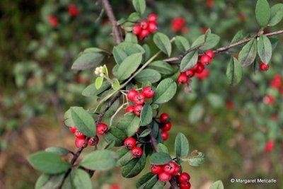 IMG_8225_-..berries.jpg
