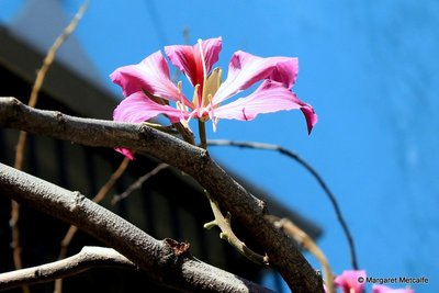 IMG_8590_-_Flower.jpg