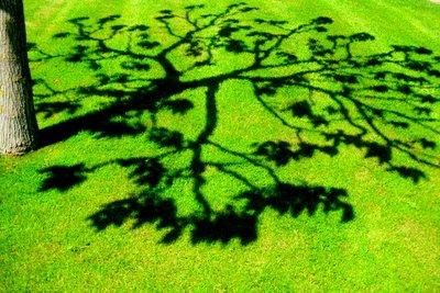 Spring shadows