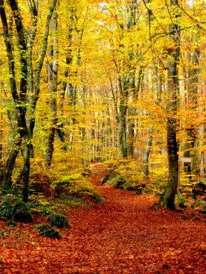 Nov_08_-_F..rd__100.jpg