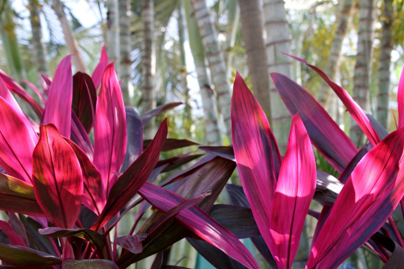 Brightly-coloured vegetation