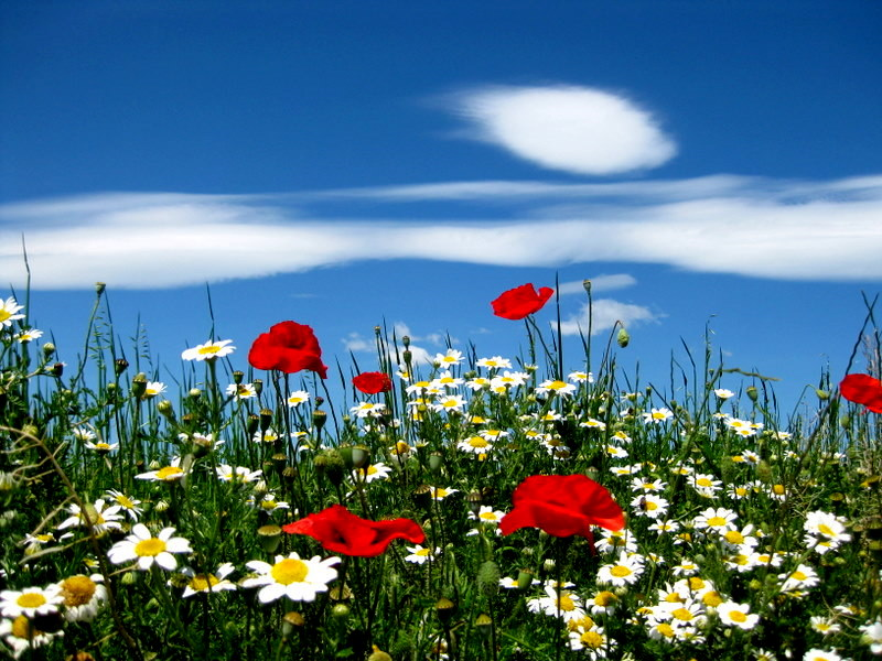Spring clouds and flowers