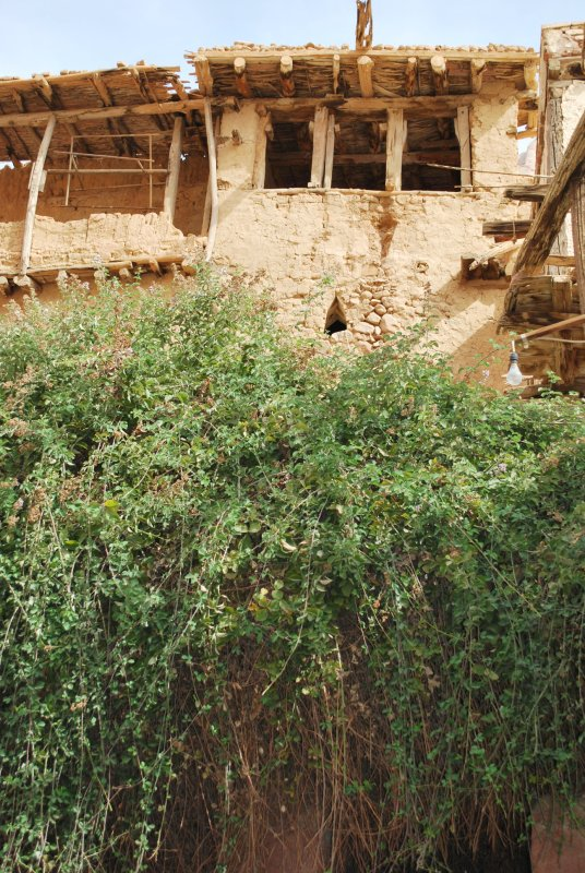 Burning Bush in St. Catherine's Monastery