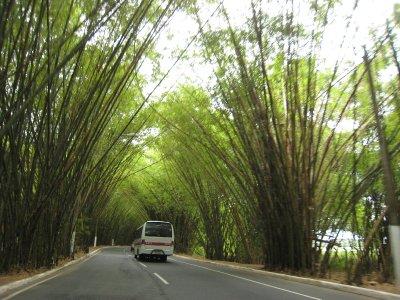 Weg naar vliegveld van Salvador met Allee van Bamboe