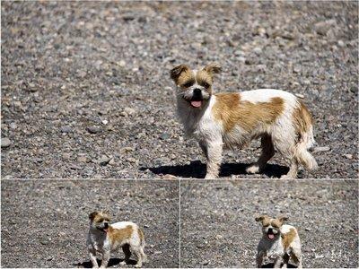 Anjing_Colresized.jpg