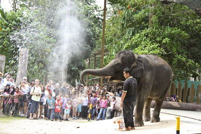 Kuala Gandah Elephant Performance