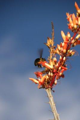Harvesting Bumblebee