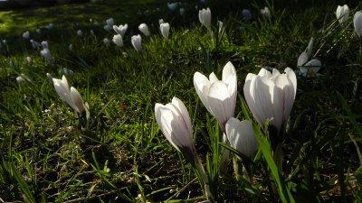 Spring Blooms in Stanley Park