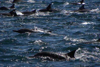 Dolphin Pod