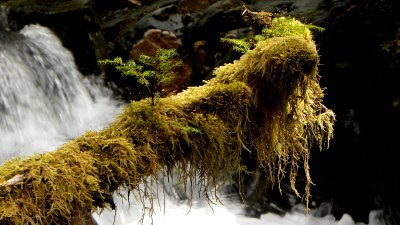 Moss Log in Detail