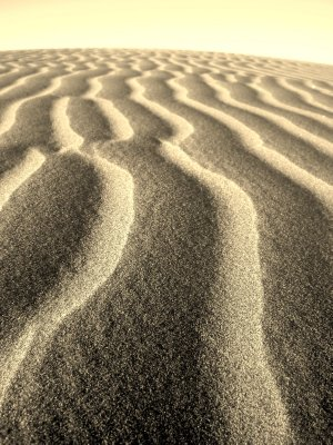 Sand Line Landscape