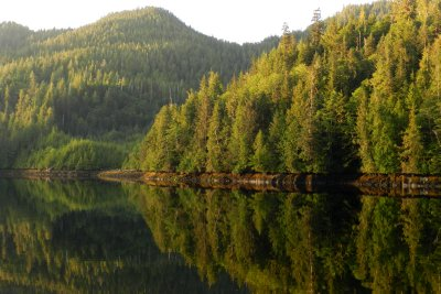 Reflection of Mountain and Trees