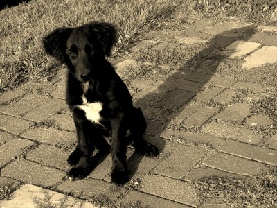 A Puppy Checkmark