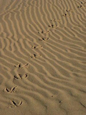 Goose Steps
