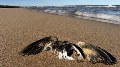 Bird, In Death