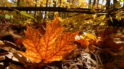 The fallen leaves of autumn