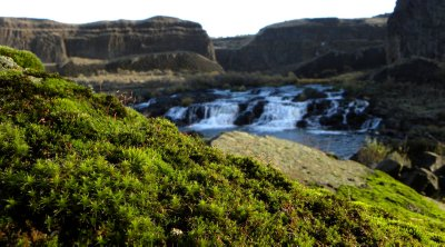 Moss and the Upper Palouse Falls