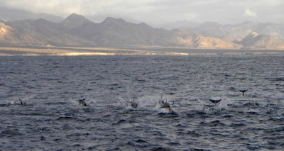 Dolphin Pod and Mountain Light