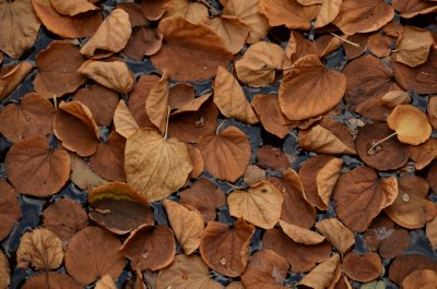 Dried Leaves on Water