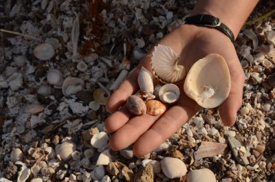 Sea Shell Collections