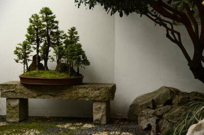Trees on Stone Bench