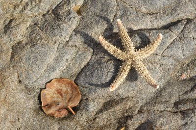 Starfish and leaf