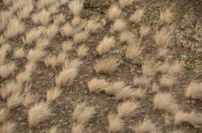 Wind Blown Grass Tufts