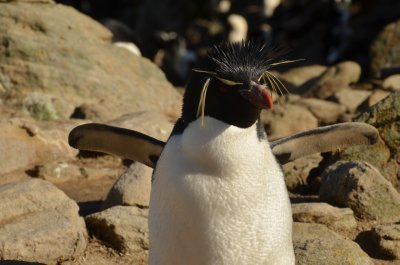 Rock Hopper Penguin Balance