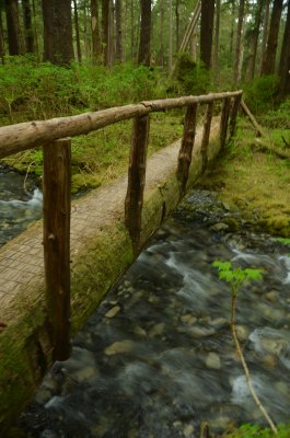 Log Bridge Over Brook