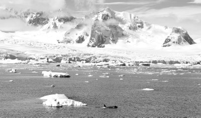 Antarctic Landscape
