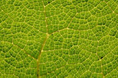 Leaf Details