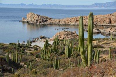 Isla Santa Catalina Landscape