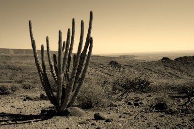 Harmonic Desert Scene